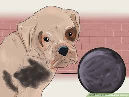 How to Cure Mange in Dogs 11 Steps with wikiHow