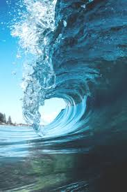 1002 best images about ocean on pinterest surf gull and the wave