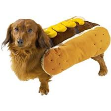 Halloween Costumes Wiener Dogs Amazon Casual Canine Diggity Dog Mustard Costume