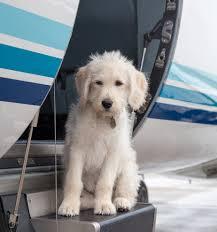 Schreibtisch F B O Mit Dem Hund Zur Arbeit Bei Privatefly Machen Wir Das Täglich