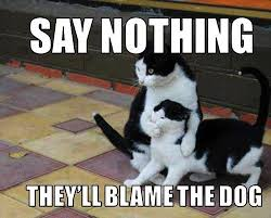 Silly Memes - silly cat memes so pets