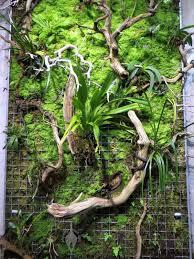Best Plants For Vertical Garden - 17 best staghorn fern u0026 mounted plants images on pinterest