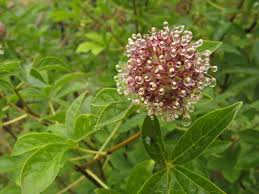 herbs for depression eight herbalists share strategies