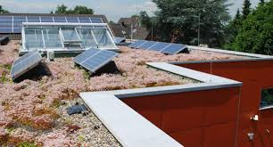 solar panels on houses solar energy and green roofs