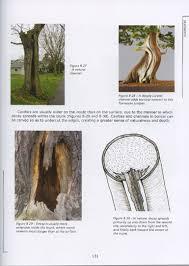 pot bonsai design bonsai bark promoting and expanding the bonsai universe page 70