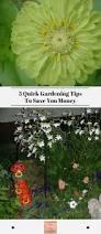 5 quick gardening tips to save you money exotic gardening