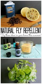 Homemade Fly Trap by Best 25 Natural Fly Repellant Ideas On Pinterest Homemade Fly