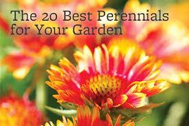 10 Best Perennials And Flowers by Perennials