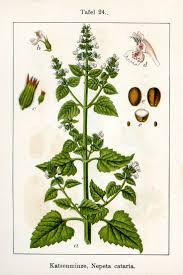 plants native to ontario 51 best ontario edible plants images on pinterest edible plants