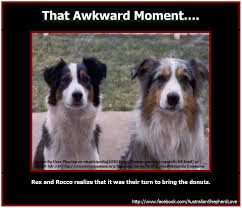 australian shepherd vs border collie you can create this image in minutes image created with