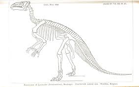 dinosaur skeleton coloring pages 100 images skeleton coloring