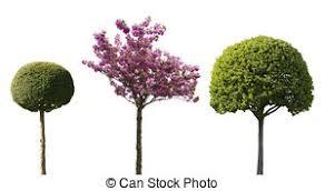 ornamental shrub images and stock photos 5 195 ornamental shrub