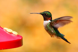 Hummingbird On A Flower - best hummingbird feeder review of four types of feeders