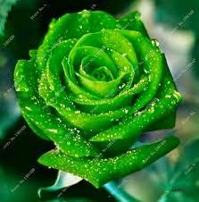 aliexpress com buy lady favorite garden flower pot flower seeds
