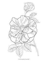 gousicteco orchid coloring page images