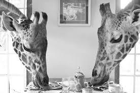 breakfast with giraffes africa adventure consultants