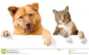 animals stock photos and royalty free images
