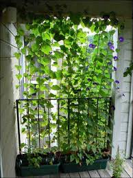 Climbing Plants On Trellis 22 Simply Beautiful Low Budget Privacy Screens For Your Backyard