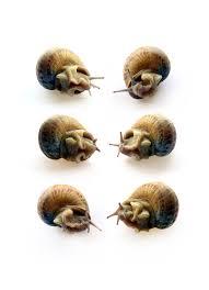 Types Of Garden Snails Garden Snails Still Mary Jo Hoffman Still On White
