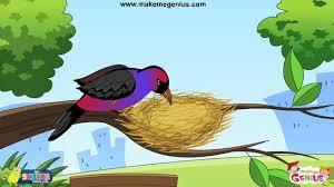animals u0027 homes birds u0027 nests for kids youtube