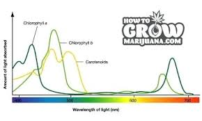light and plant growth best light for plant growth hid scale how does led light affect