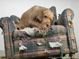 5 steps to bringing a new dog into your home l ways to prepare for