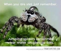 Funny Spider Meme - when you re sad the meta picture
