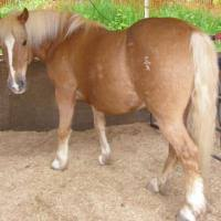 pictorial guide to horse colors part 1 chestnut bay brown and