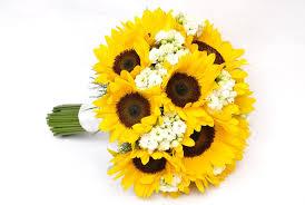 foto wallpaper bunga matahari mimpi bunga matahari hd wallpaper desktop lebar definisi tinggi