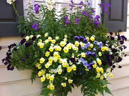 Flowers For Window Boxes Partial Shade - 17 best images about perennials for windowboxes on pinterest