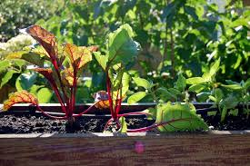 Fall Vegetable Garden Ideas How To Prepare For A Fall Vegetable Garden
