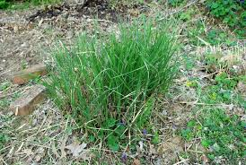 it s not work it s gardening grass you dig