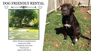 rent a pit landlord only rents to tenants with big dogs like pit bulls