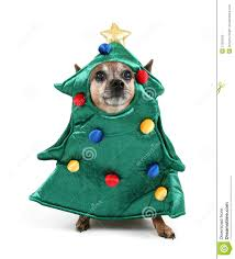 Chihuahua Christmas Ornaments A Chihuahua Dressed Up For Christmas As A Tree Stock Image Image