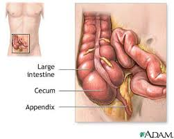 Right Side Human Anatomy Clinician On Net Pain In Left Lower Abdomen May Be Due To