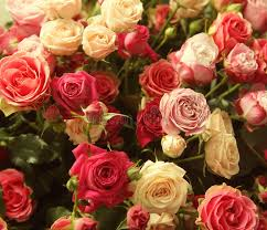 multicolor roses multicolor roses bouquet stock image image of beautiful 49927109