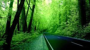 tiny bridge forest road 7032912