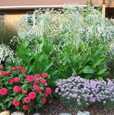 annuals provide charm to your cottage garden
