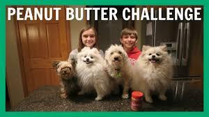 dog peanut butter dog peanut butter challenge