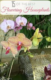 Plants Easy To Grow Indoors Flowering Indoor House Plants 15 Of The Best Flowering Houseplants