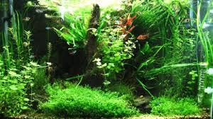 Aquascaping Plants Aquascaping Plants Needle Leaf Java Narrow Leaf Java Glosso Hc