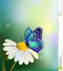 vector blue butterfly on the daisy flower stock image image 9408561