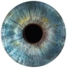 Job Description For Optician Optometrist Job At Vision Express In Garden City Ny Us Linkedin