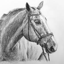 lion sketch arttutor