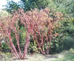 gaia garden autumn color kansas