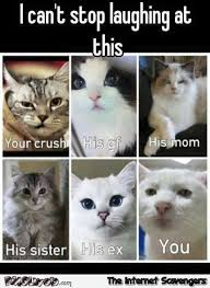 Funny Crush Memes - your crush his entourage and you funny cat meme pmslweb