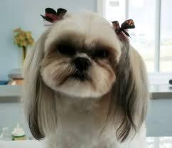 lush puppy studio home facebook