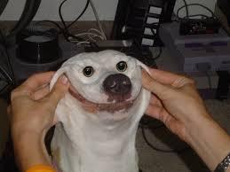 Smiling Dog Meme - cute smiling dog funny