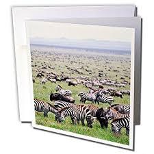 pumpernickel press wildlife cards buy great plains zebras embossed blank greeting cards set of