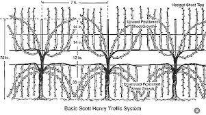 Trellis System Wine Trellis Designs Trellising Grape Vines Gardening
